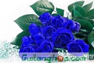 Hoa hồng xanh tượng trưng cho nhiều ý nghĩa