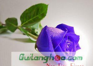 Hoa hồng xanh đẹp nhất