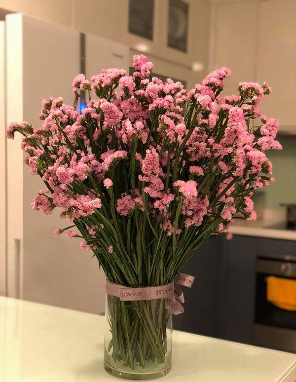 Hoa salem màu hồng