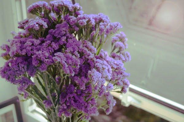 Hoa salem màu tím