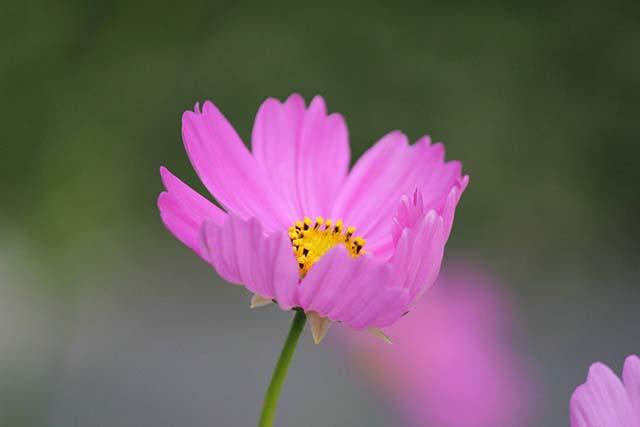 Hoa vũ tru mong manh